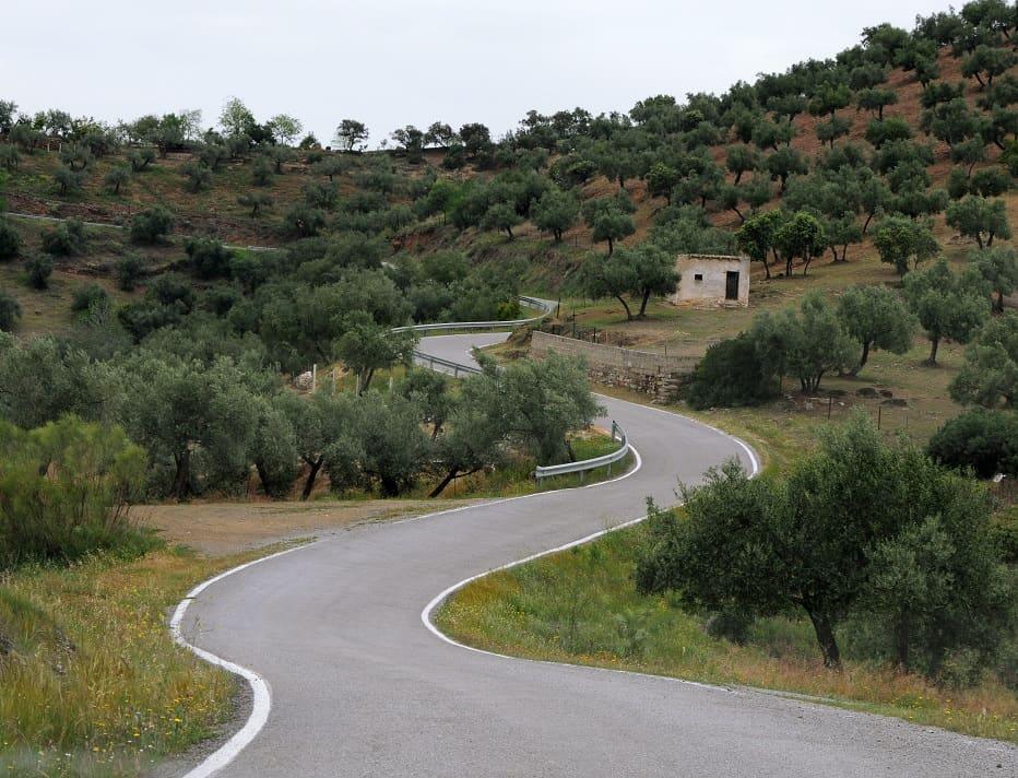spanien olivtrad
